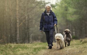 Man walking his dogs